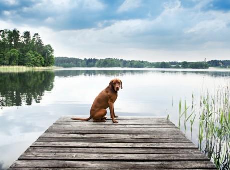 ein hund sitzt am see und genießt die tolle Umgebung