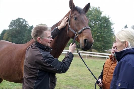 Pferdeosteopath berlin, pferdeosteopathie in berlin