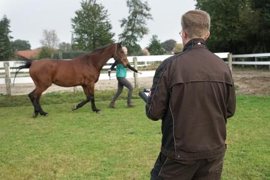 pferd beim osteopath für pferde auf einer grünen wiese, karsten gemmeker