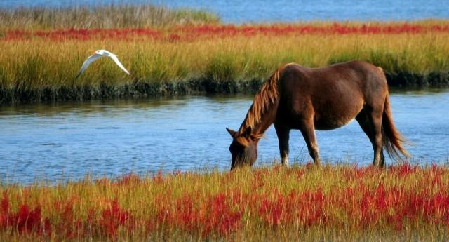Ein braunes Pferd in freier Wildbahn trinkt Wasser aus einem See