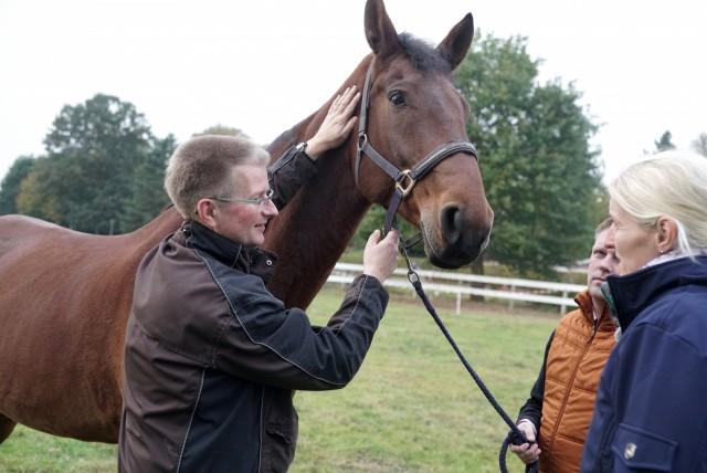 In Anwesenheit der Halter untersucht der Pferdeosteopath das Pferd