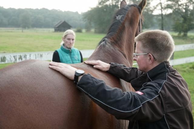 Ostheopathie beim Pferd