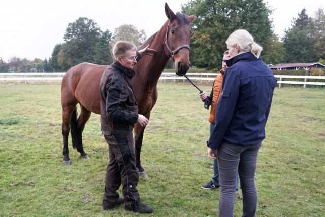 Pferdeostheopathie